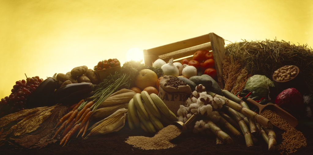 Produce being lit by sunrise : Stock Photo