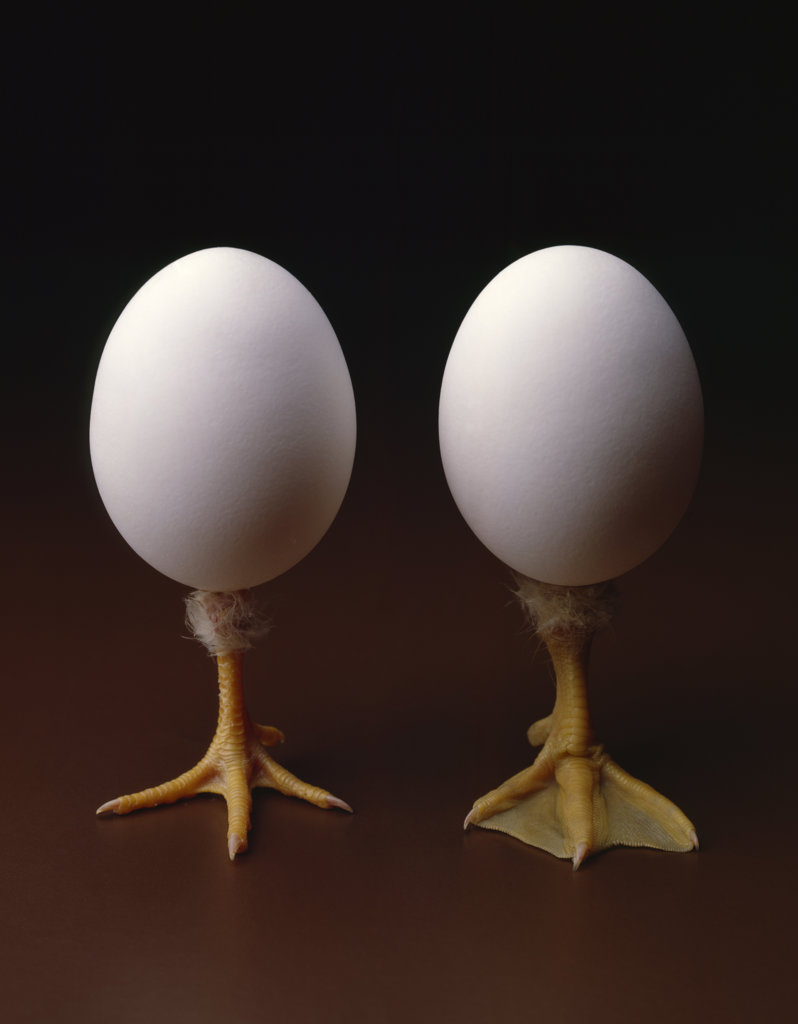 Stock Photo: 4080-211 Duck egg and chicken egg with legs coming out on brown background, studio shot