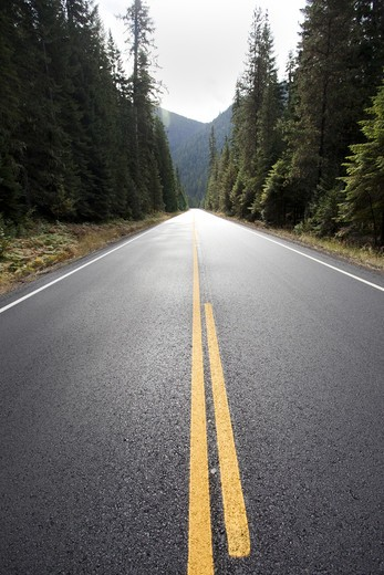 Empty Highway Through Forest, Montana, USA : Stock Photo