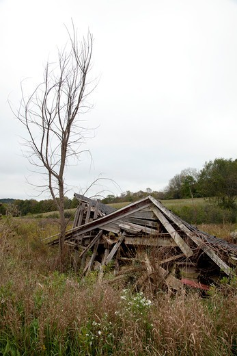 Stock Photo: 4084R-1942 Collapsed Shack Next to Dead Tree