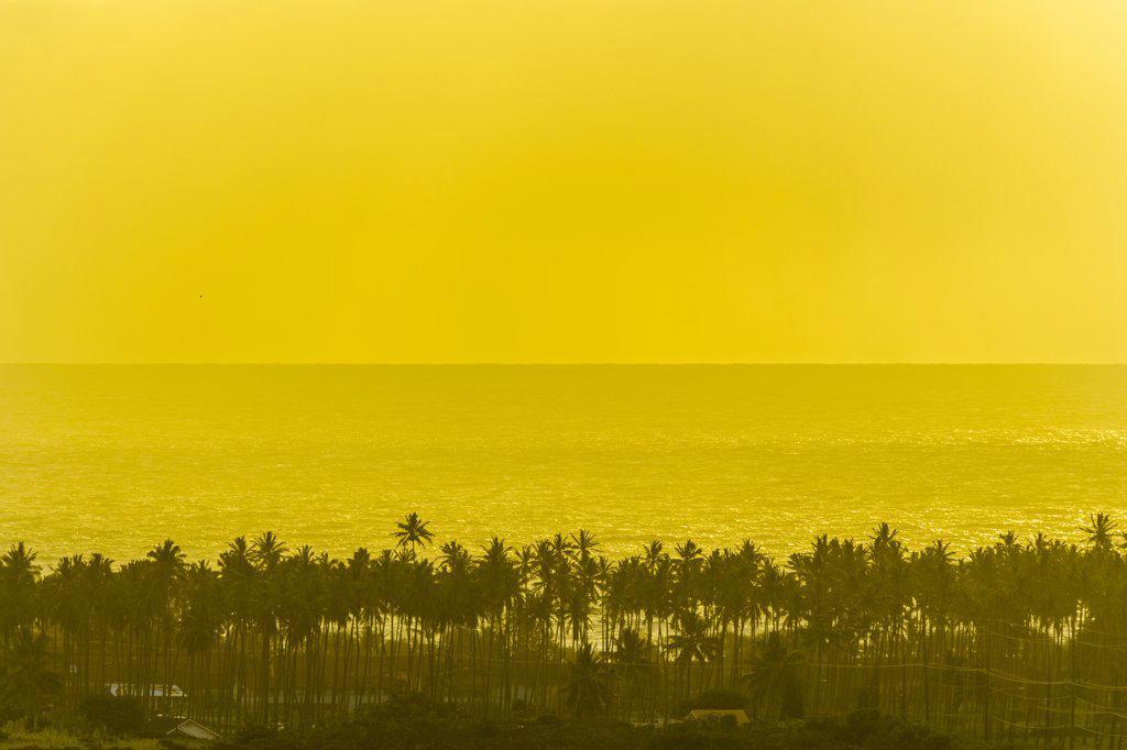 Stock Photo: 4097-1057 High angle view of palm trees at the coast, Coconut Coast, Kauai, Hawaii, USA