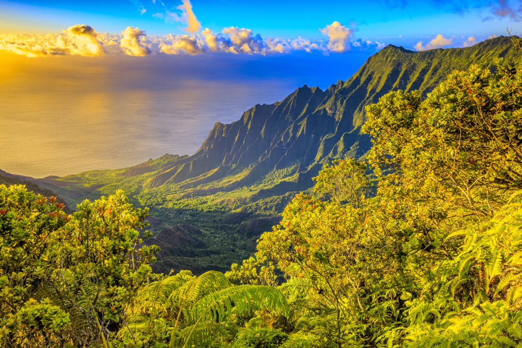 Stock Photo: 4097-1215 Trees in a rainforest, Kalalau Valley, Na Pali Coast, Kauai, Hawaii, USA