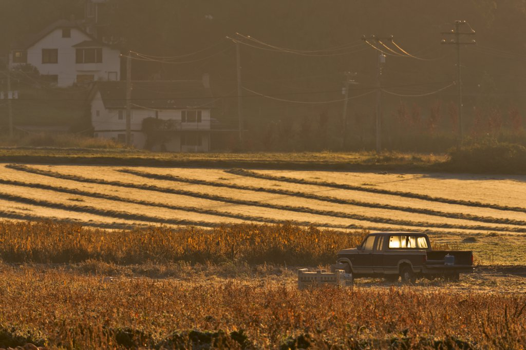 Stock Photo: 4097-1351 Pick-up truck in a farm, Saanich Peninsula, Vancouver Island, British Columbia, Canada