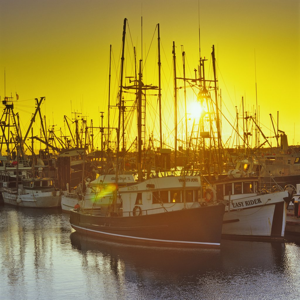 Stock Photo: 4097-1410 Fishing boats moored at a harbor, French Creek, Vancouver Island, British Columbia, Canada
