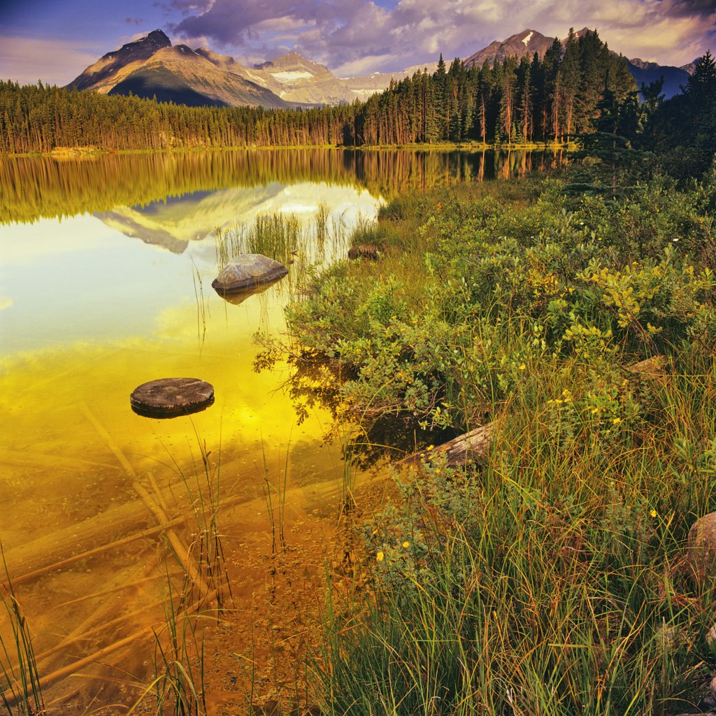 Stock Photo: 4097-1583 Lake in a forest, Icefields Parkway, Lake Herbert, Banff National Park, Alberta, Canada