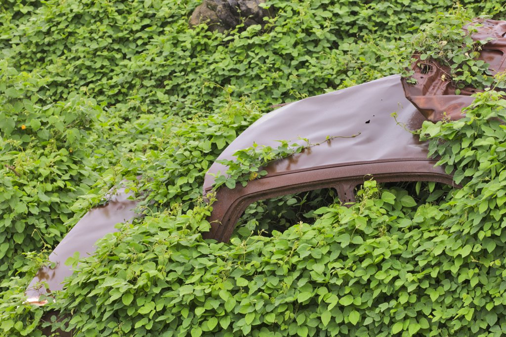 Car wreck covered with vines, Maui, Hawaii, USA : Stock Photo