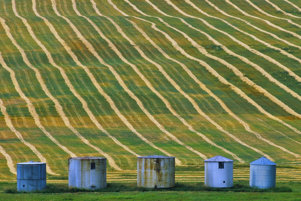 Silos in a field, Alberta, Canada : Stock Photo