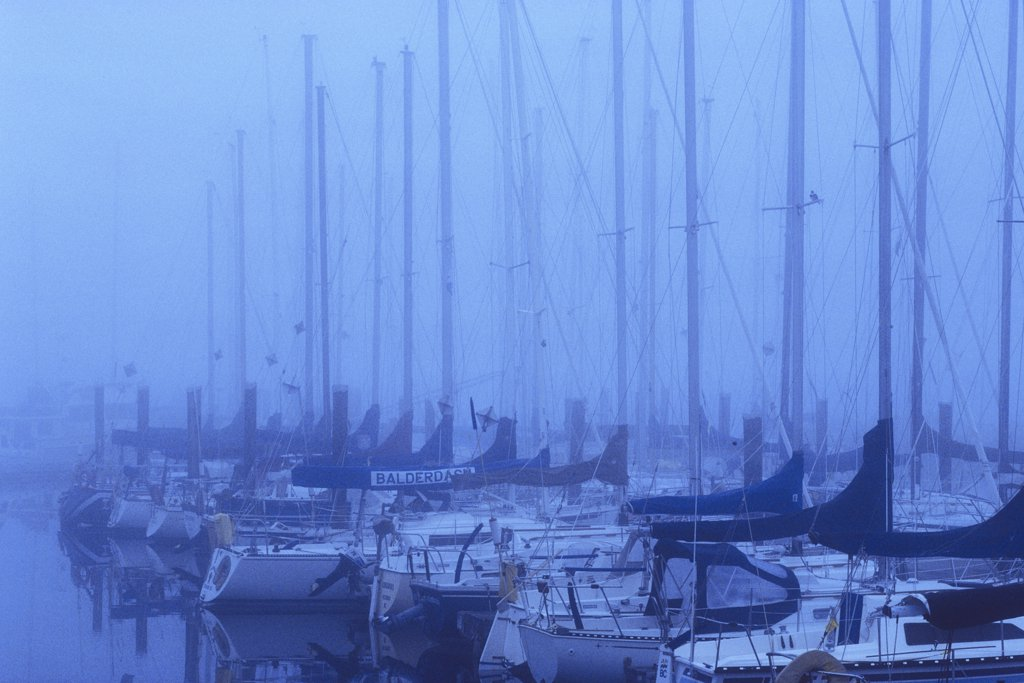 Boats In the sea, Royal Victoria Yacht Club, Victoria, Vancouver Island, British Columbia, Canada : Stock Photo