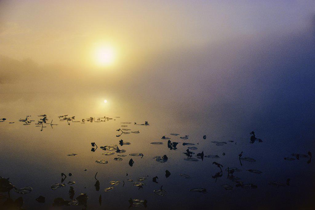 Stock Photo: 4097-2372 Lake at sunrise, Swan Lake, Swan Lake Nature Sanctuary, Saanich, Victoria, Vancouver Island, British Columbia, Canada