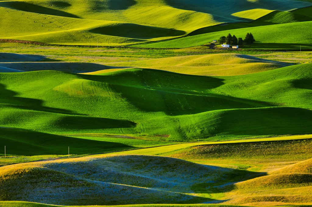 Stock Photo: 4097-2627 High angle view of rolling hills, Palouse, Washington State, USA