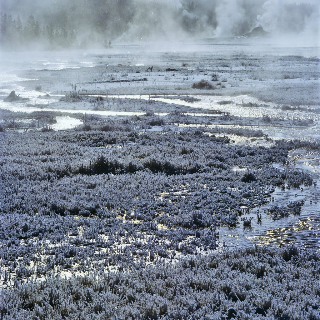 Stock Photo: 4097-2911 Steam emerging from a hot spring, Firehole Lake, Yellowstone National Park, Wyoming, USA