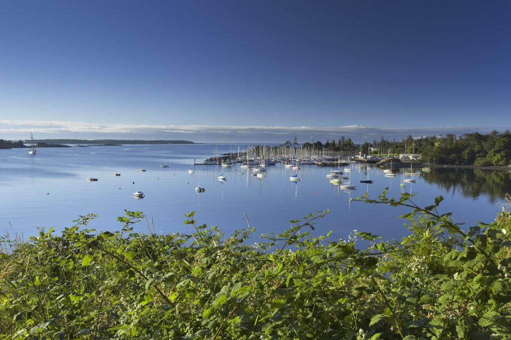 Sailboats at a yacht club, Royal Victoria Yacht Club, Victoria, Vancouver Island, British Columbia, Canada : Stock Photo