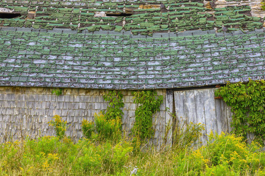 Stock Photo: 4097-4059 Barn in a field, Cape Turner, Prince Edward Island, Canada