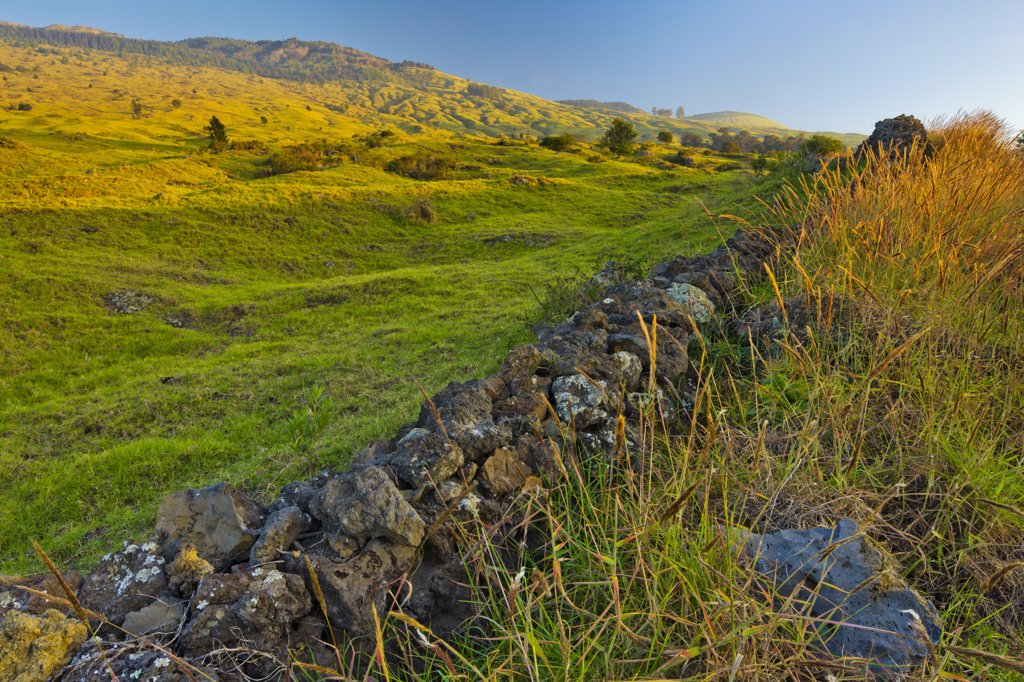 Stone fence and pasture, Maui, Hawaii, USA : Stock Photo