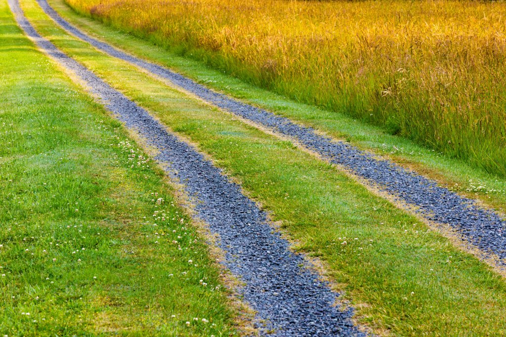 Stock Photo: 4097-4554 Canada, Vancouver Island, Rural driveway