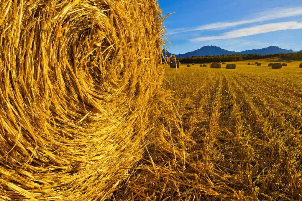 Canada, Alberta, Hay bails on field : Stock Photo