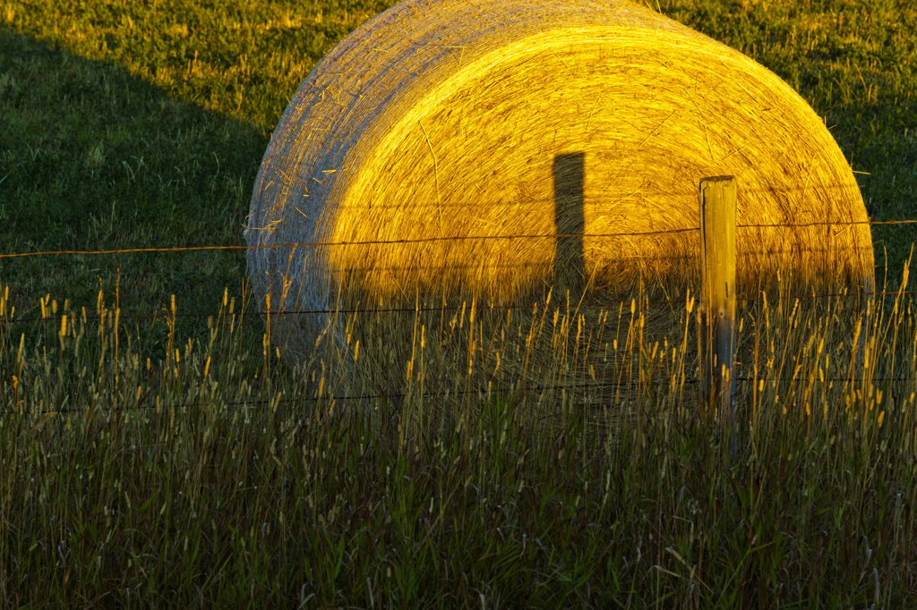 Canada, Alberta, Hay bails on field at sunrise : Stock Photo