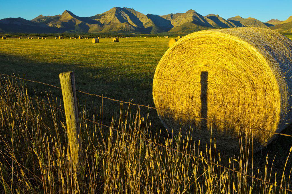 Canada, Alberta, Hay bails in field at sunrise : Stock Photo