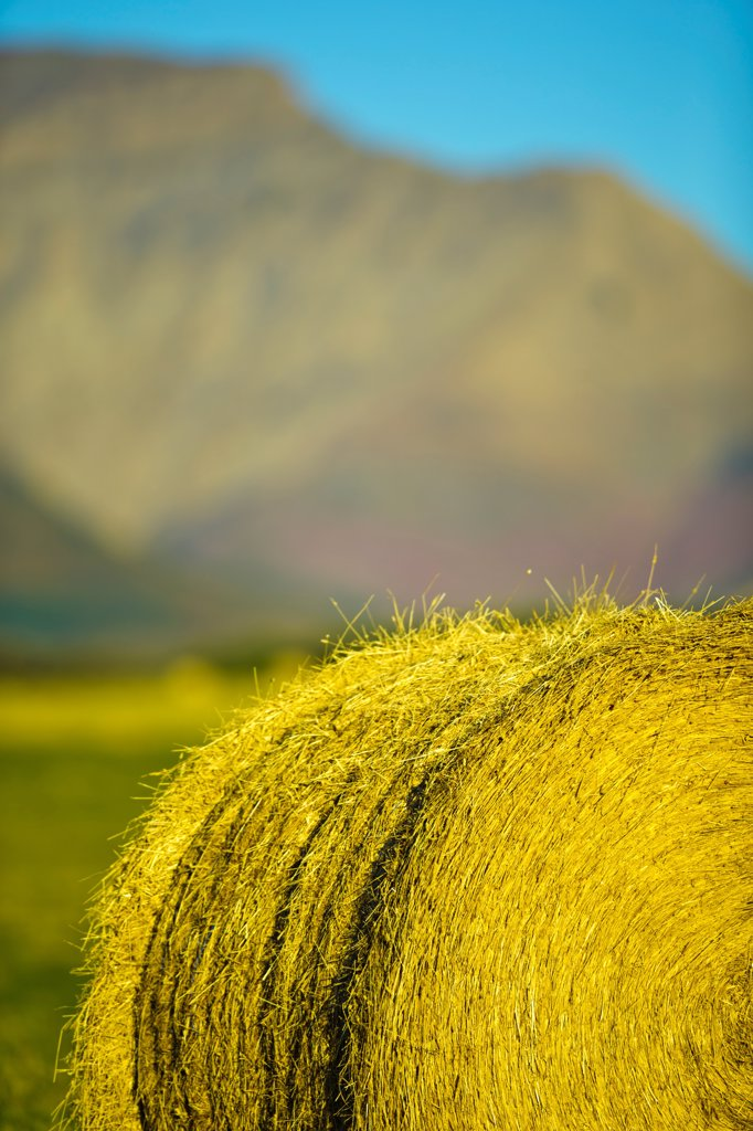 Stock Photo: 4097-4889 Canada, Alberta, Hay bails in field