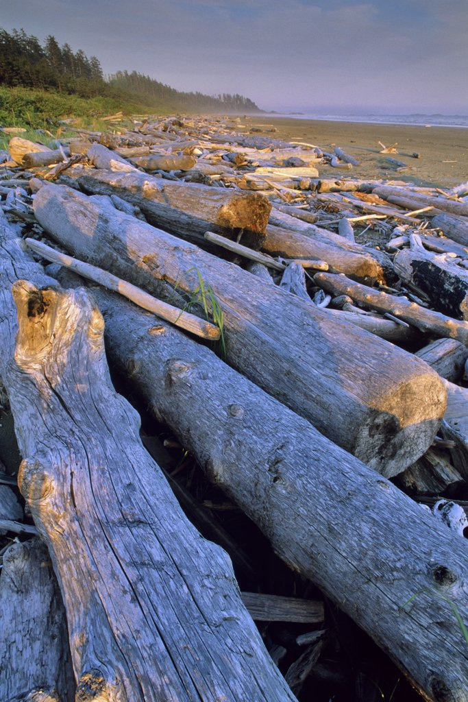 Driftwoods on the beach, Long Beach, Pacific Rim National Park Reserve, Vancouver Island, British Columbia, Canada : Stock Photo