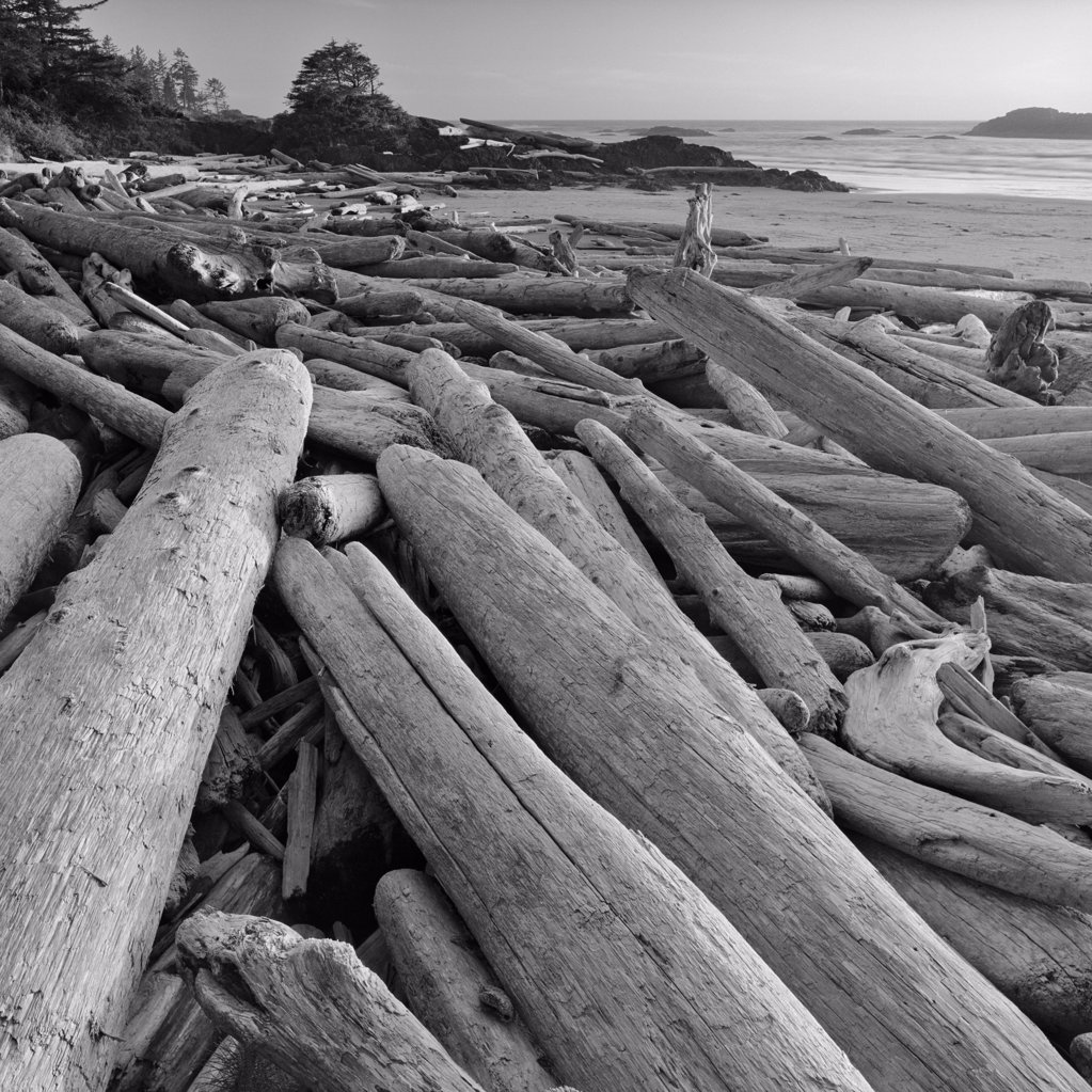 Stock Photo: 4097-657 Driftwoods on the beach, Long Beach, Pacific Rim National Park Reserve, Vancouver Island, British Columbia, Canada