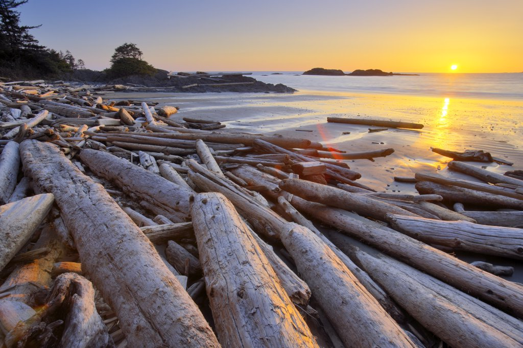 Stock Photo: 4097-753B Driftwood on the beach, Pacific Rim National Park Reserve, Vancouver Island, British Columbia, Canada