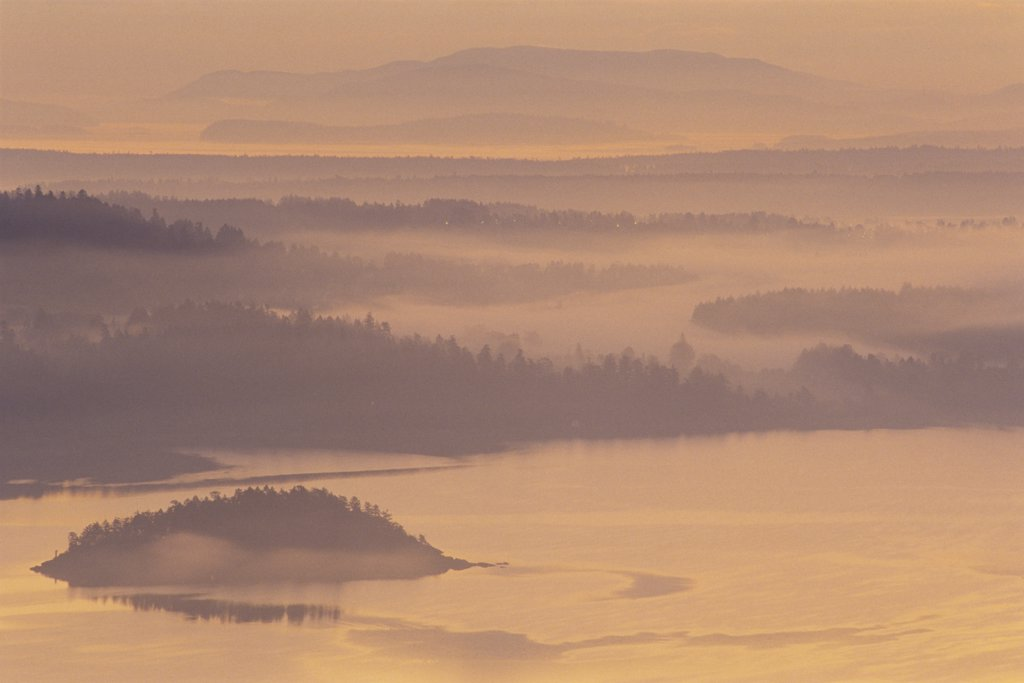 Stock Photo: 4097-855 Forest covered with fog, Finlayson Arm, Saanich Peninsula, Vancouver Island, British Columbia, Canada