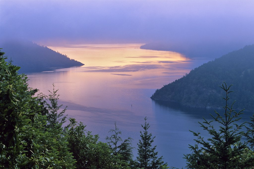 Fog over river, Finlayson Arm, Saanich Peninsula, Vancouver Island, British Columbia, Canada : Stock Photo