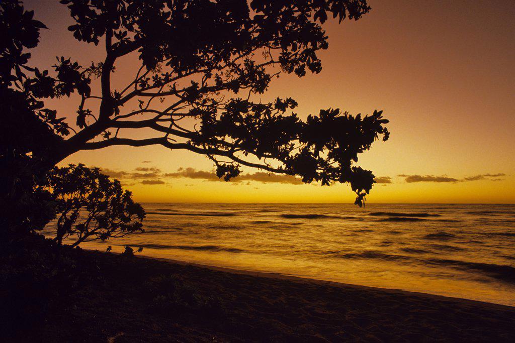 Silhouette of trees on the beach at sunrise, Kauai, Hawaii, USA : Stock Photo