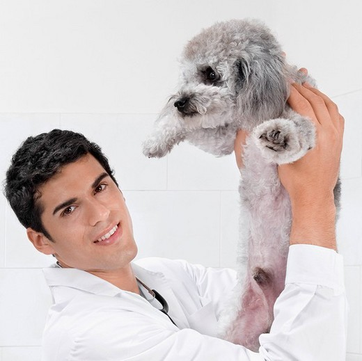 Vet carrying a dog : Stock Photo