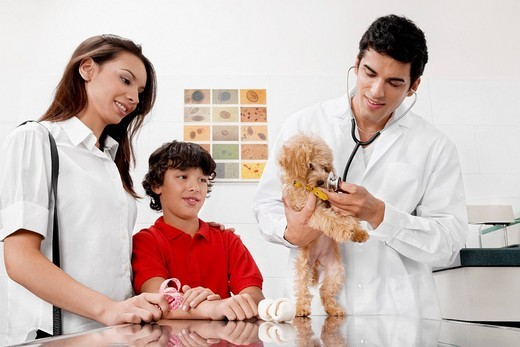 Stock Photo: 4105-2439 Vet examining a dog