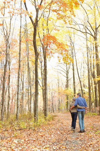 Stock Photo: 4113R-157 Rear view of mature couple walking on Autumn forest track