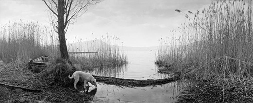 A dog standing at the lakeside of Lago di Vico (Vico lake), Lazio, Viterbo, Italy. : Stock Photo