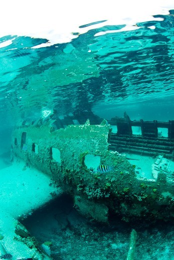 Stock Photo: 4115-3683 Plane wreck that has formed an artificial reef in the Exumas, Bahamas, Caribbean. June 2009.