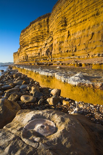Mineralised ammonite fossil at the base of Burton Bradstock cliffs, Dorset, England. Jurassic Coast World Heritage Site. : Stock Photo