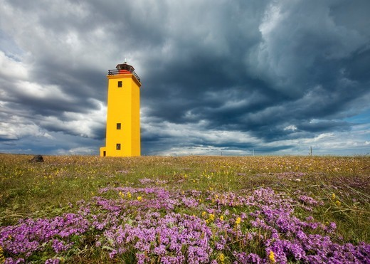 Stock Photo: 4115-5965 Wildflowers in bloom, with brightly painted yellow Selvogsviti Lighthouse under dark storm clouds,Reykjanes, Iceland, July 2009.