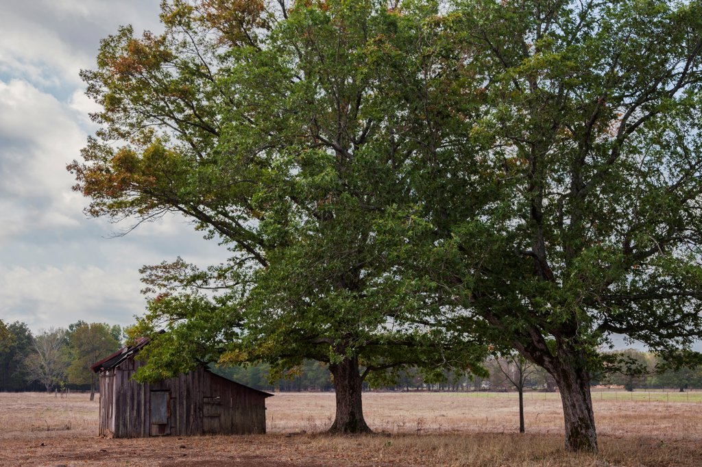 USA, Arkansas, Old barn and pecan trees in country : Stock Photo
