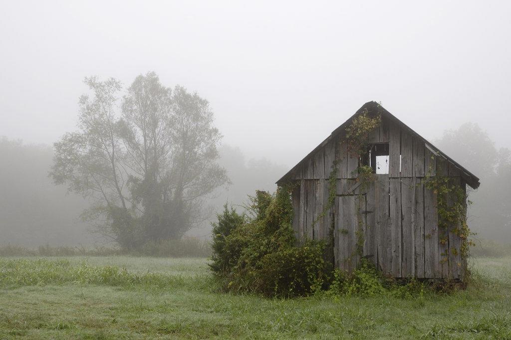 Stock Photo: 4116-489 Shack in a field, Arkansas, USA