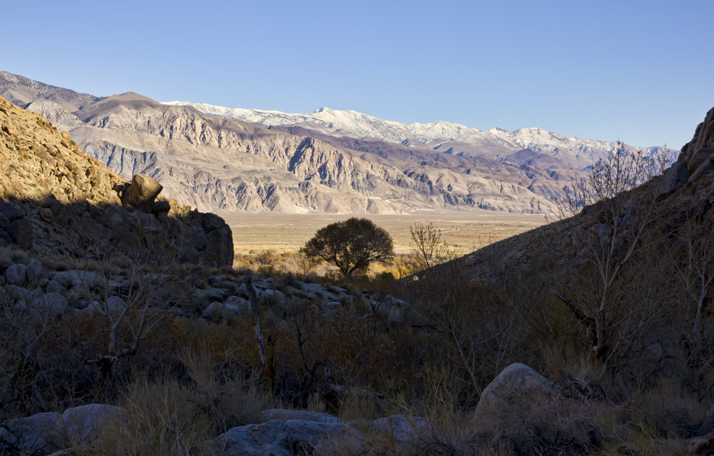 Stock Photo: 4116-636 USA, California, Inyo Mountains, Lone tree in gap