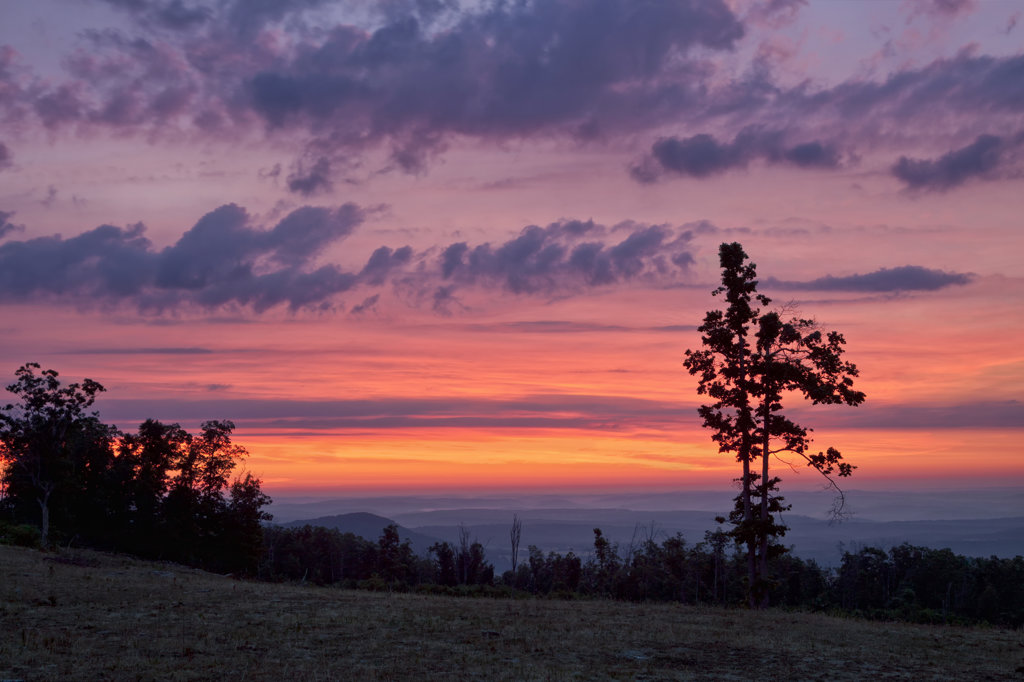 Stock Photo: 4116-918 USA, Arkansas, Colorful sunrise sequence from hill, with silhouetted trees