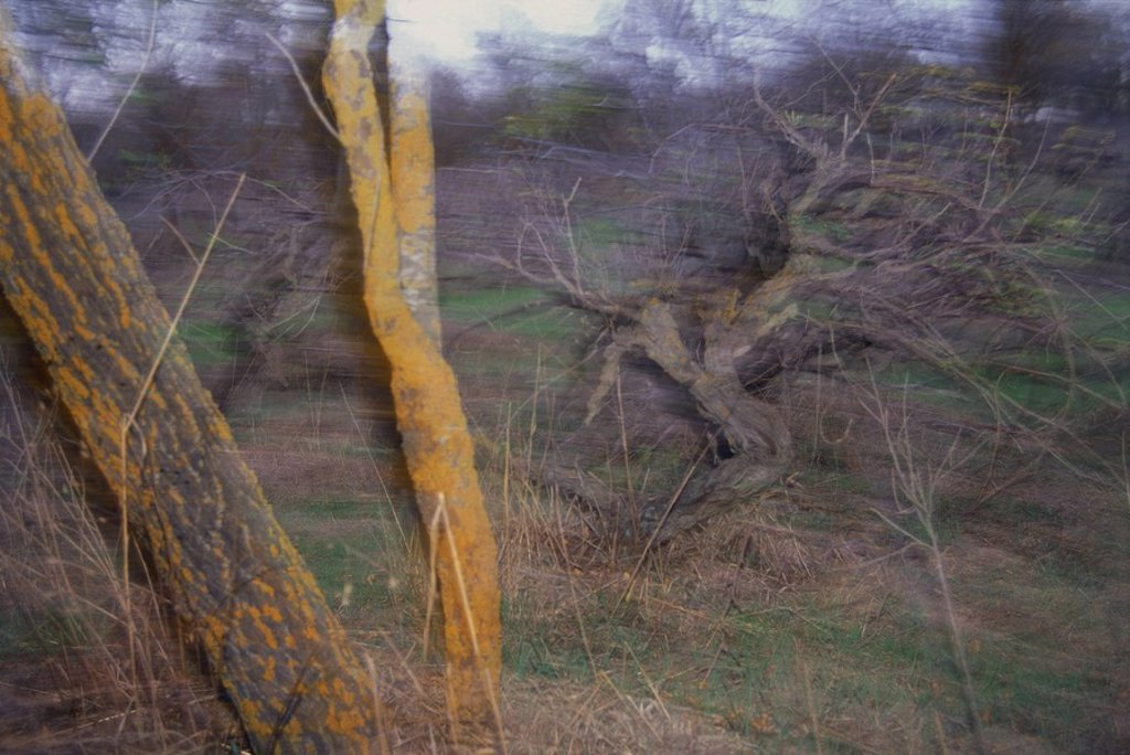 Stock Photo: 4119-3613 Photograph of a grove in Cyprus