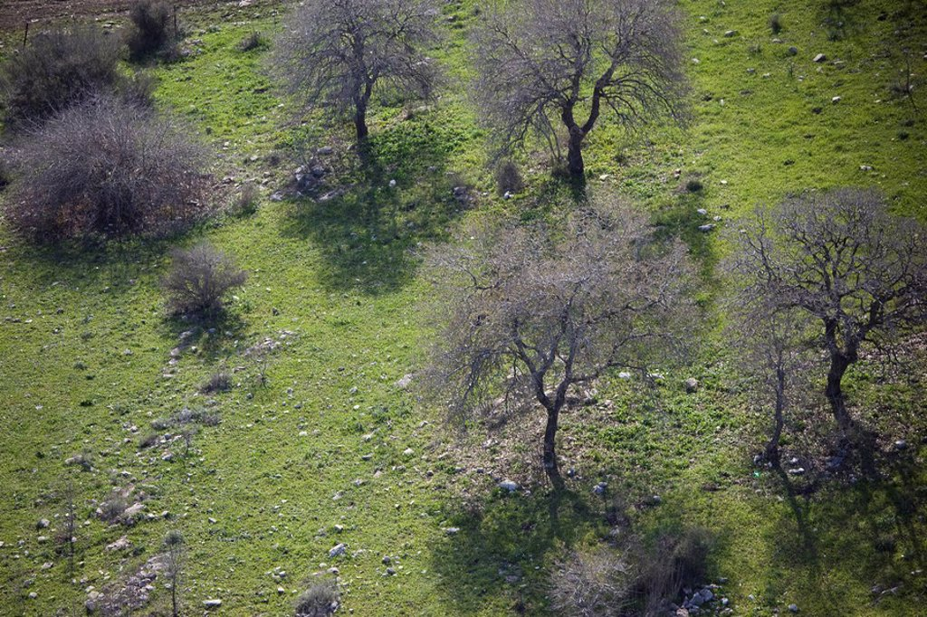 Aerial photograph of a grove in the Galilee : Stock Photo