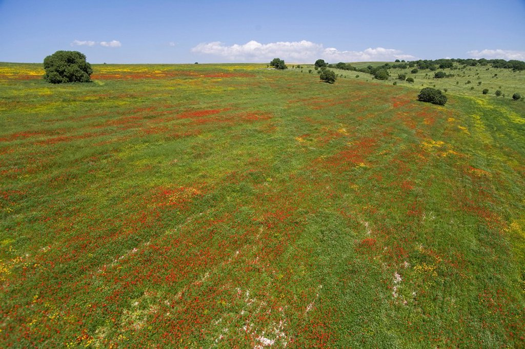 Stock Photo: 4119-7431 Aerial photograph of a blooming field in Israel