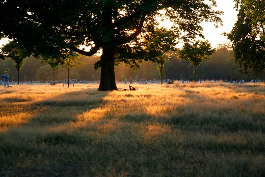 Hot summer evening in Kensington Gardens, London, UK : Stock Photo