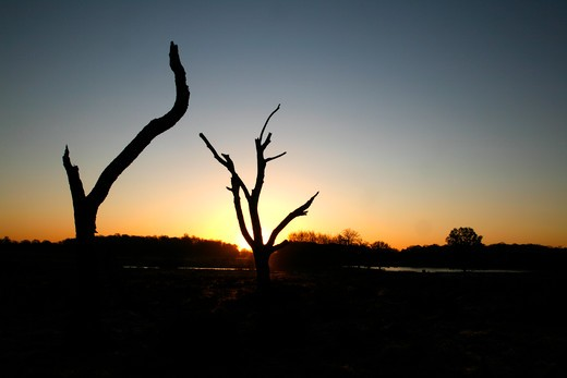 UK, London, Richmond Park, Trees silhouetted by rising sun near Pen Ponds in middle of Richmond Park : Stock Photo