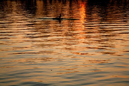 UK, London, Putney, Rower rowing on River Thames at sunset : Stock Photo