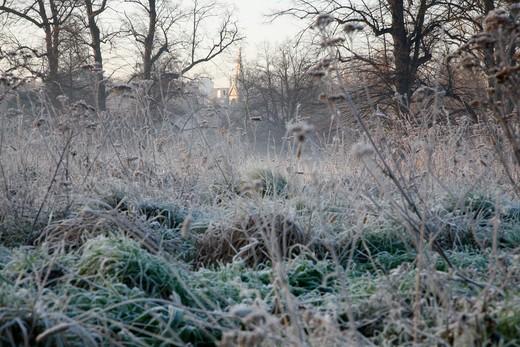 UK, London, Looking across frosty Kensington Gardens from Buck Hill to distant Albert Memorial : Stock Photo