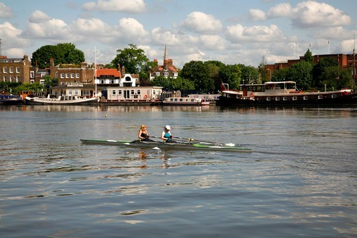 Rowers on the River Thames near the Dove pub at Hammersmith, London, UK : Stock Photo