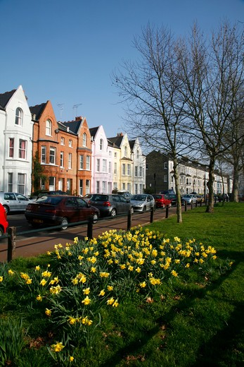UK, London  Fulham, Daffodils in front of Crondace Street : Stock Photo