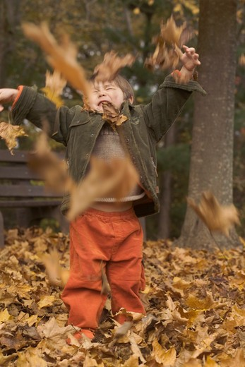 Stock Photo: 4125-115 Boy playing with dried autumnal leaves, New Jersey, USA